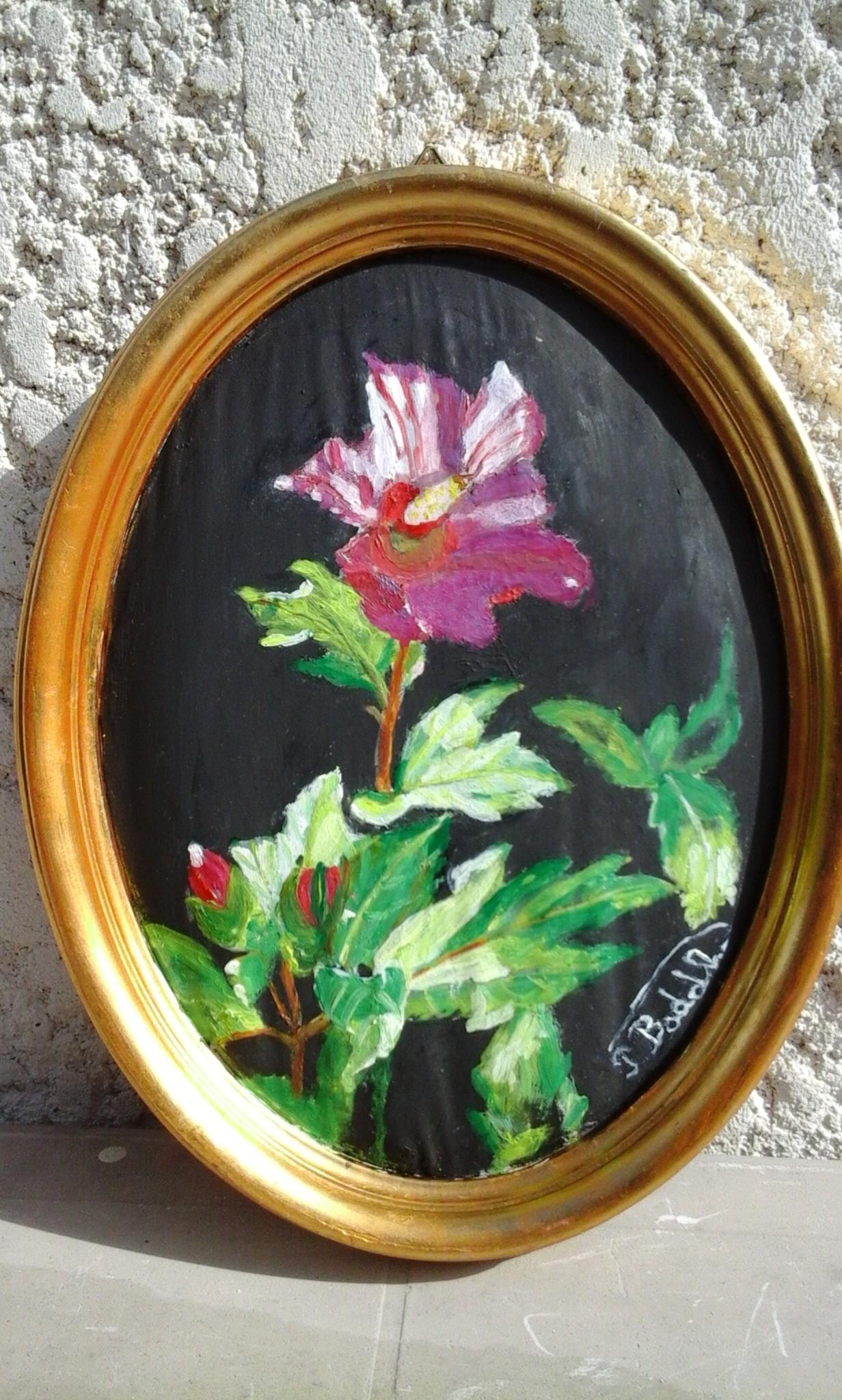hibiscus-violet